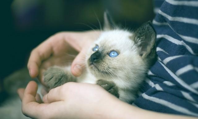 ostéopathie pour chat